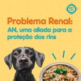 Problema Renal Pet